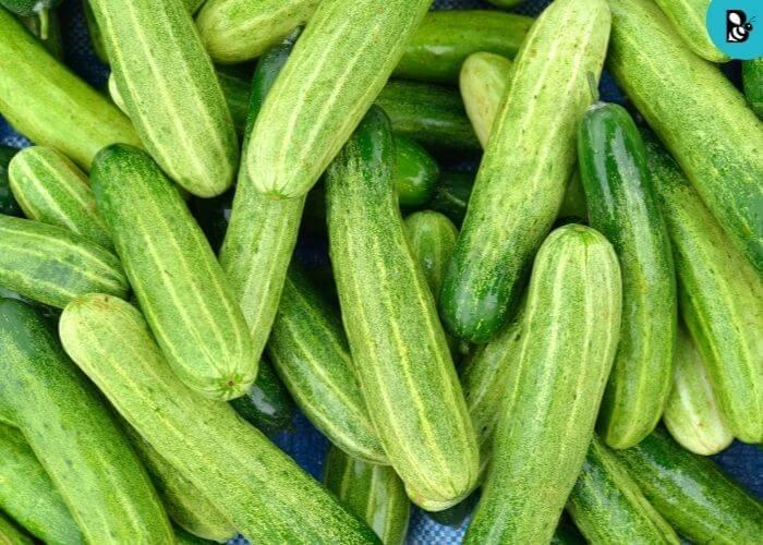 Cucumber Healthbeautybee