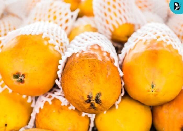 Papaya Healthbeautybee
