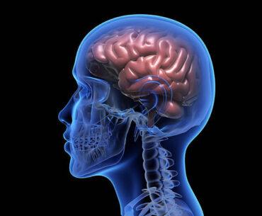 best food to brain health
