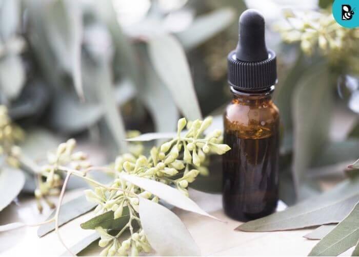 eucalyptus oil Healthbeautybee